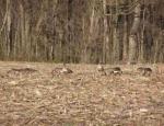 Missouri goose hunting