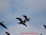 goose hunting Missouri