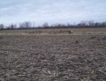 goose huntingMissouri
