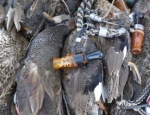 Missouri waterfowl hunting