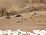 spring snow goose hunts