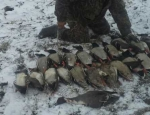 duck hunting Missouri