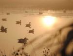 Missouri duck hunting club