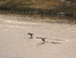 duck hunting club