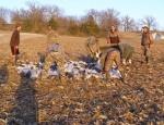 Missouri snow goose hunt