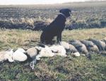 Missouri goose hunt