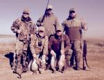 specklebelly goose hunting