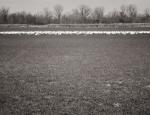 snow goose decoy