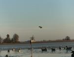 Missouri duck hunting trip