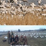 Snow Goose Hunts
