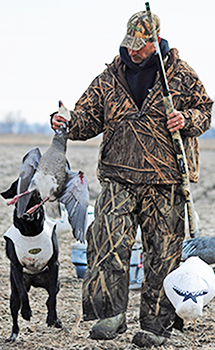 Professional Missouri Snow Goose Hunting Guides