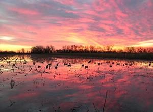 Missouri–The Perfect Place for Duck Hunting