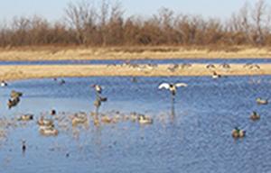 Best Duck Hunting Decoy Strategies
