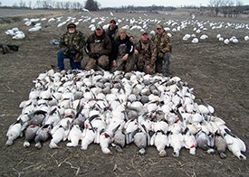 Should I Consider Guided Hunts for Snow Geese?