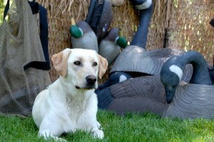 Are You Ready for the Upcoming Missouri Waterfowl Hunting Season?