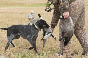 Hunting Tips to Help Bag Your Goose