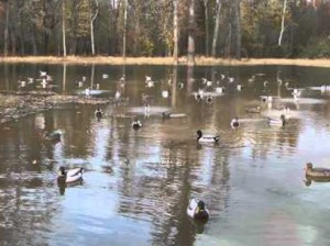 Duck Decoys - Decoying with motion!