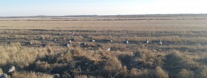 Blind Concealment for Better Goose Hunting