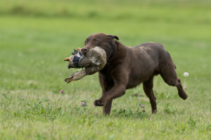 Best Methods for Training Your Retriever