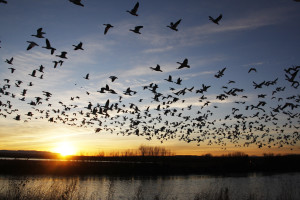 6 Reasons Why Missouri Duck Hunting Should Be Part of Your Future